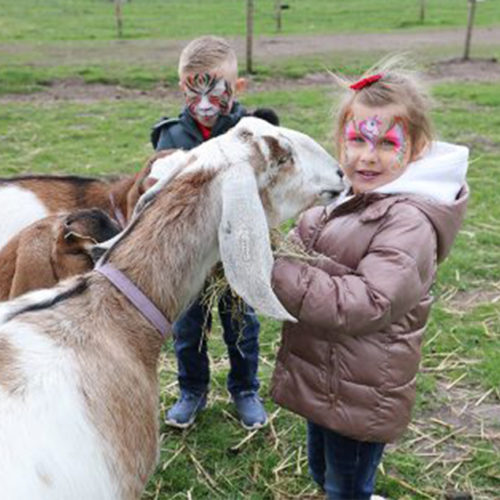 children playing with goats