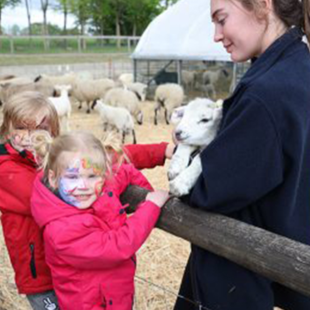 children playing with lambs