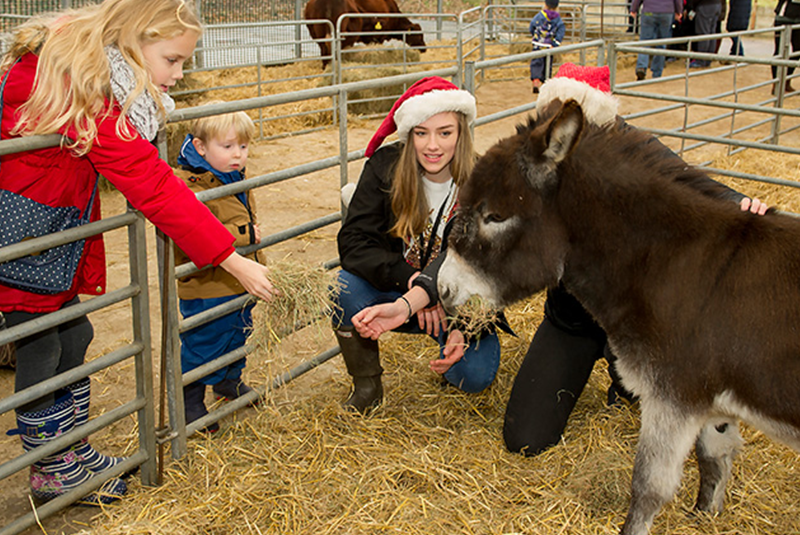 people wearing Santa hats feeding donkeys
