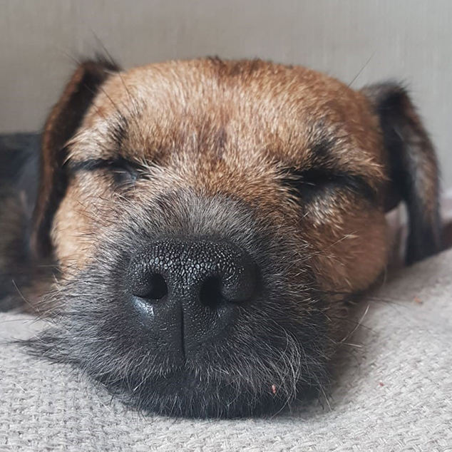 dog having a snooze at dog day care in Guildford