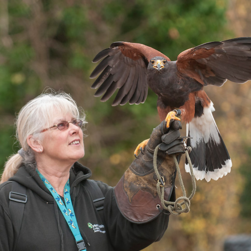 bird handler with eagle
