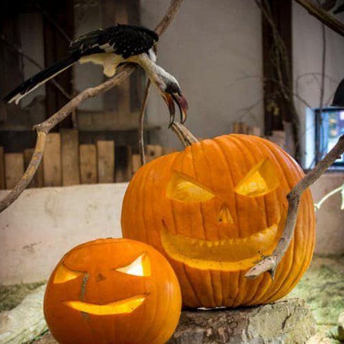 bird-with-pumpkins